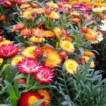 Flor inmortal la belleza plasmada en artesanía