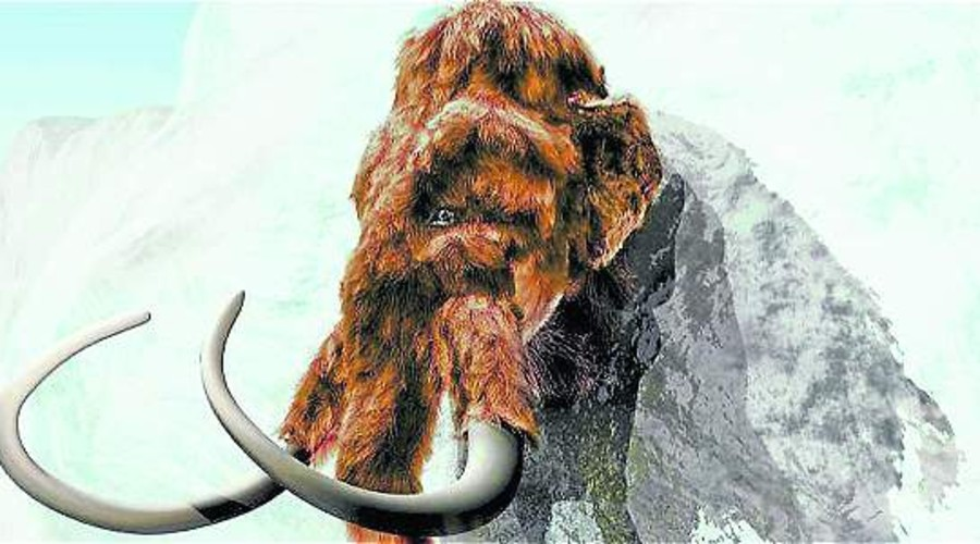 El mamut podría ser 'revivido', según estudio | El Imparcial de Oaxaca
