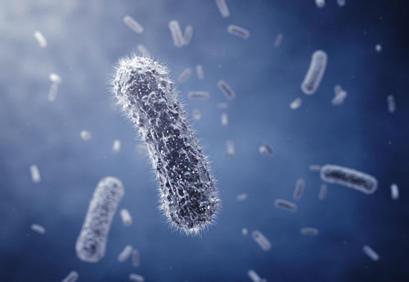 El virus de la rabia podría ser la cura del cáncer | El Imparcial de Oaxaca