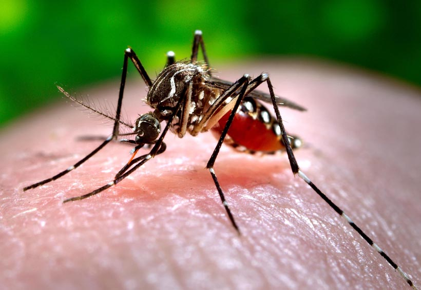 Realizan acciones preventivas para combatir dengue, zika y chikungunya