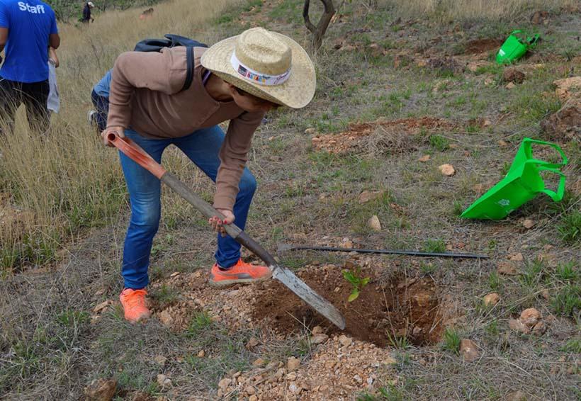 Realizan reforestación en el Cerro del Crestón