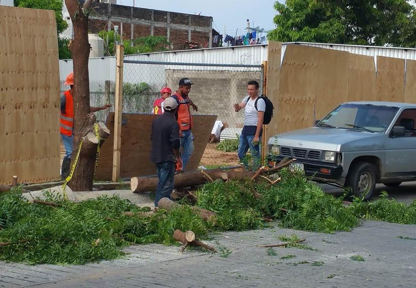 En la Costa talan árboles para construir una empresa departamental