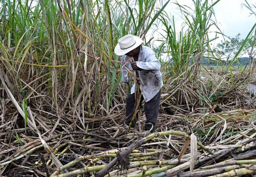 México y EU aún renegocian comercio azucarero   El Imparcial de Oaxaca