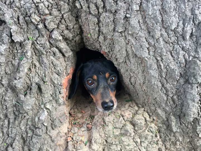 Bomberos rescatan a un ¿perro? de un árbol | El Imparcial de Oaxaca