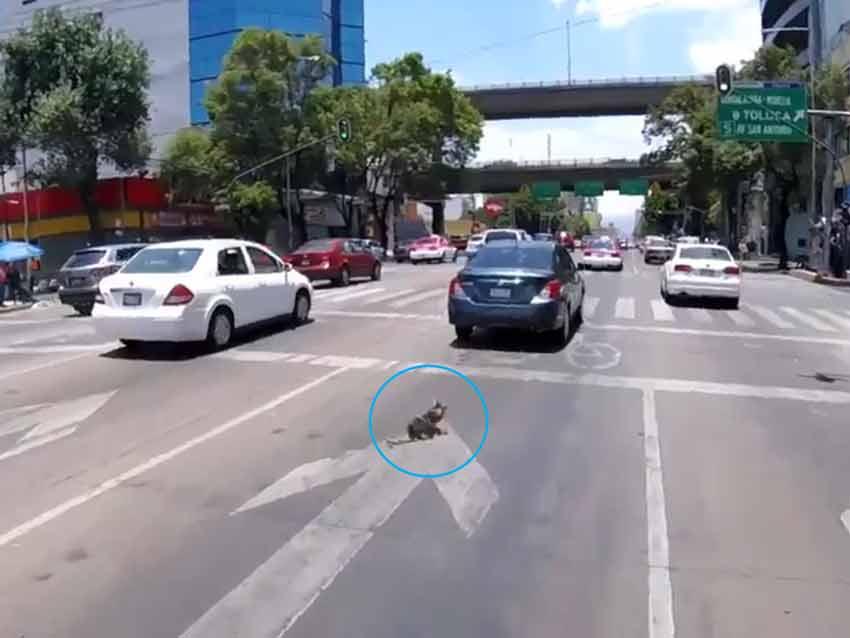 Video: Ciclista salva a perrito que corría 'como loco'