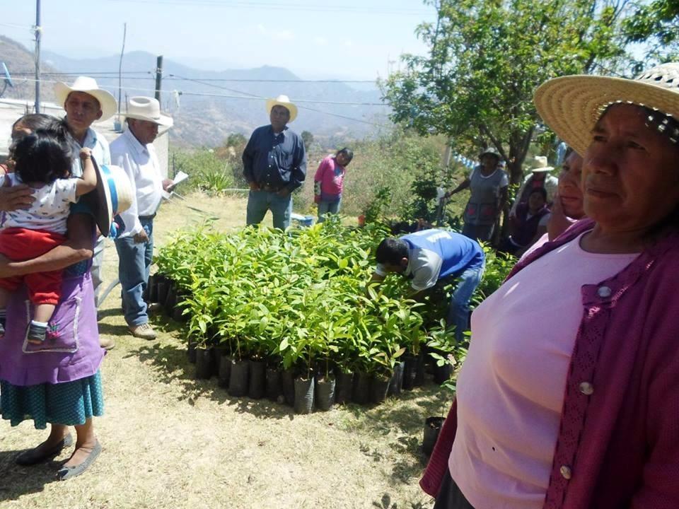 Crean alianza para  reforestar la Mixteca   El Imparcial de Oaxaca