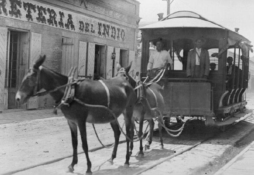 Las mulas en el ideario colectivo de Oaxaca