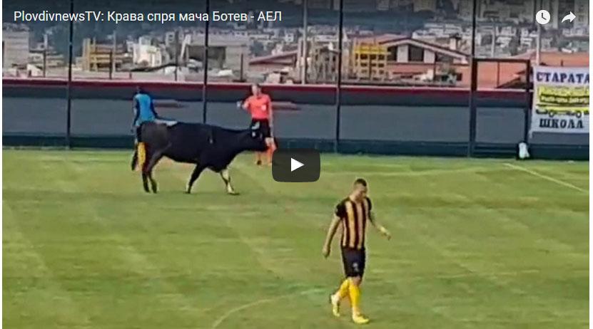 YouTube: vaca interrumpió partido de fútbol y se robó el show