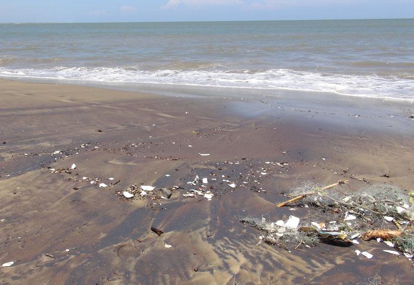 En el Istmo estiman daños en la producción del camarón | El Imparcial de Oaxaca