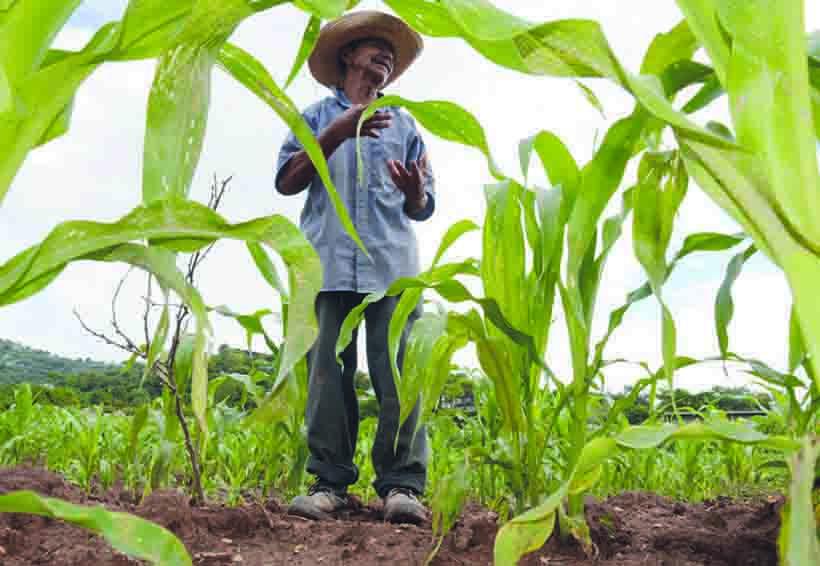 En la Cuenca, lamentan campesinos  abandono del munícipe