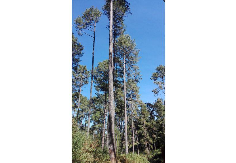 ¿Qué haremos con los bosques?