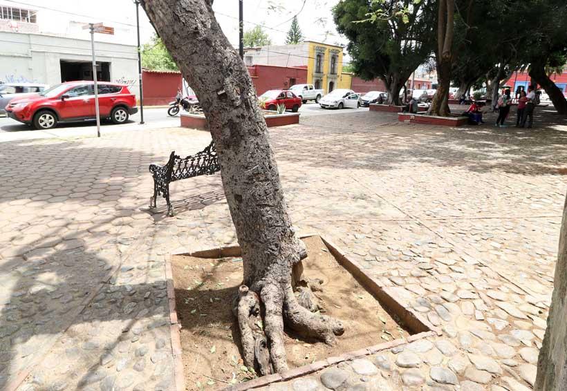 En 10 o 20 años el arbolado de Oaxaca podría  desaparecer por enfermedades