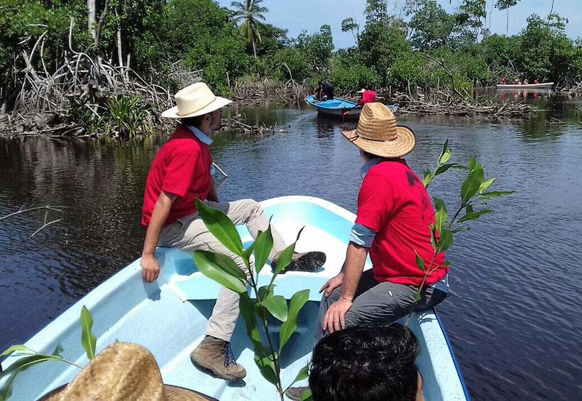 Reforestan 39.5 hectáreas de la laguna La Ventanilla | El Imparcial de Oaxaca