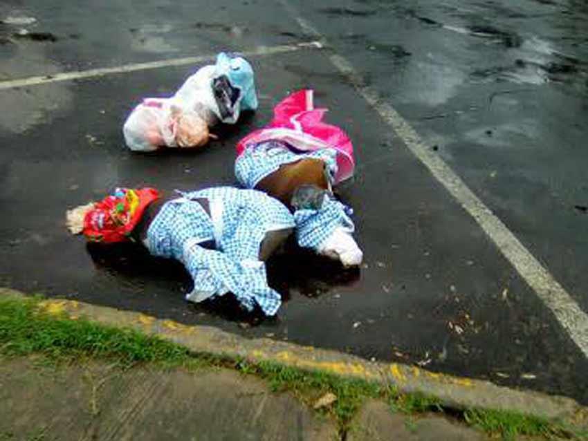 Torturan y matan a 2 pitbulls en la CDMX | El Imparcial de Oaxaca