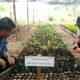 Plantarán 80 mil árboles en zona norte del Istmo