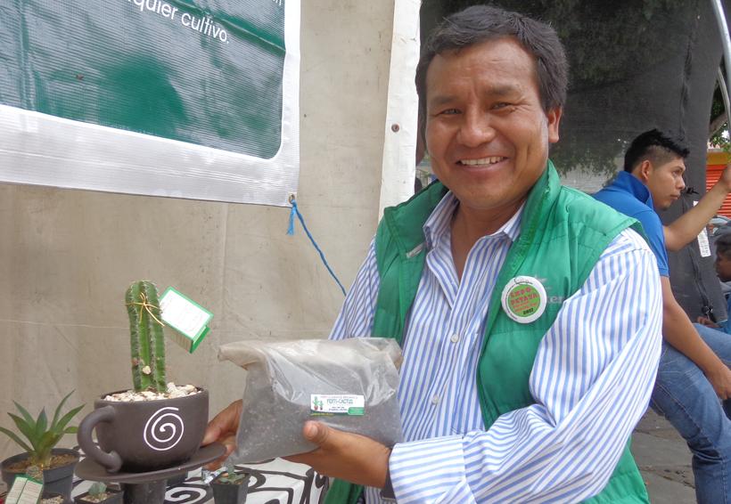Logran industrialización  orgánica de la pitaya en la Mixteca