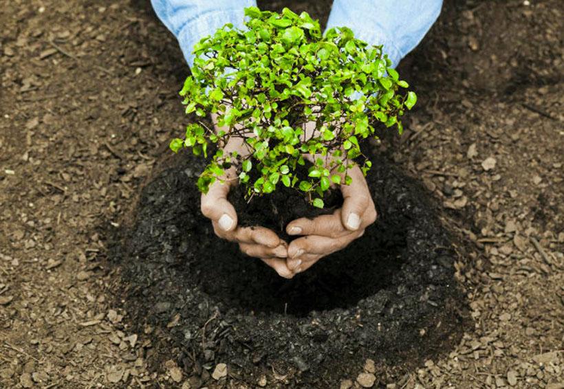 Iniciará Coesfo reforestación masiva en la Mixteca