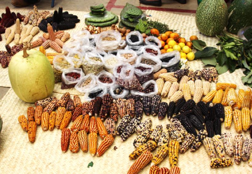 Oaxaca, con variedad de especies agrícolas nativas | El Imparcial de Oaxaca