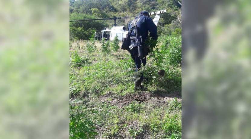 Destruyen plantíos en  Miahuatlán   El Imparcial de Oaxaca