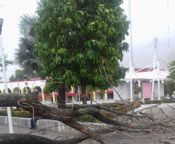 Preocupa caída de árboles ante temporada de lluvias en la Cuenca