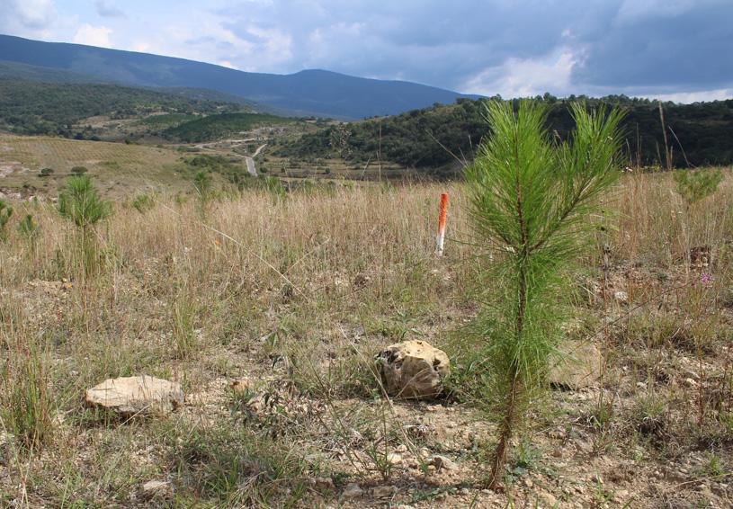 En Tlaxiaco conservarán manto  acuífero con árboles