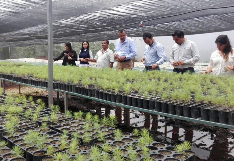 En Hidalgo Itundujia Inician la producción de árboles