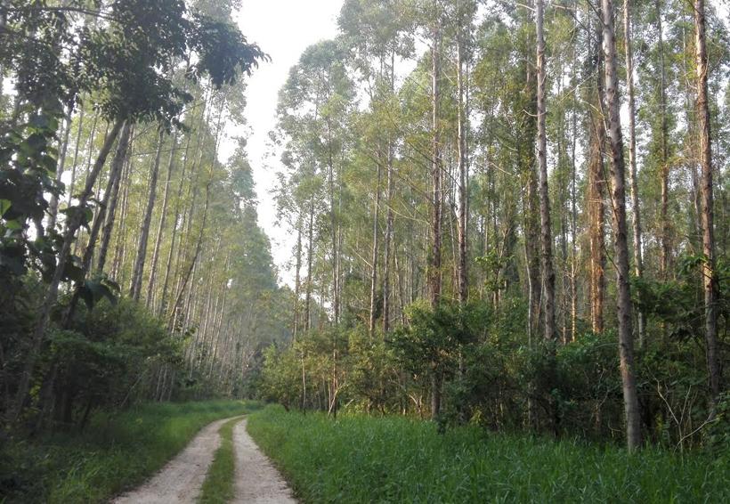Día del Árbol en Oaxaca