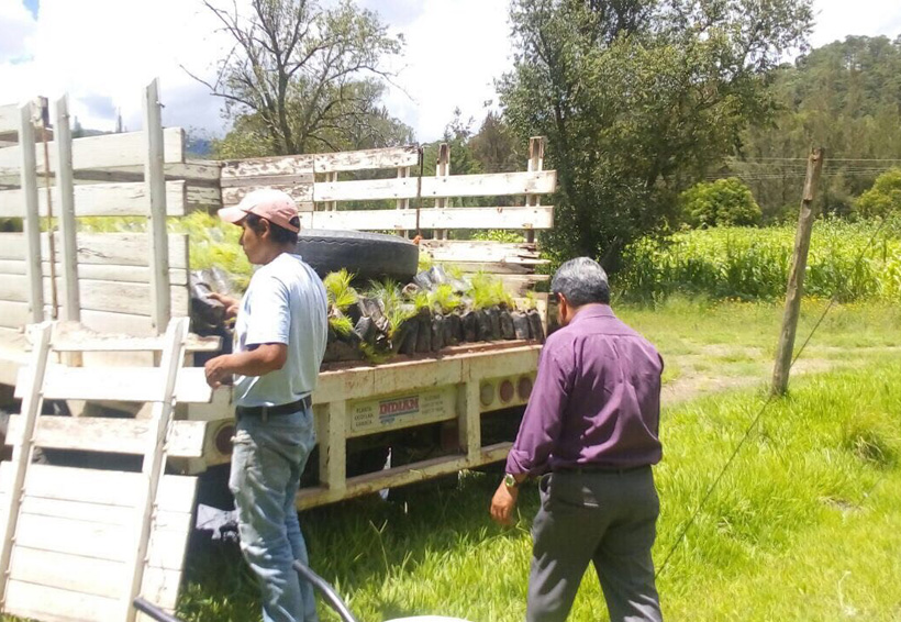 Festejarán Día Mundial del Árbol en Tlaxiaco