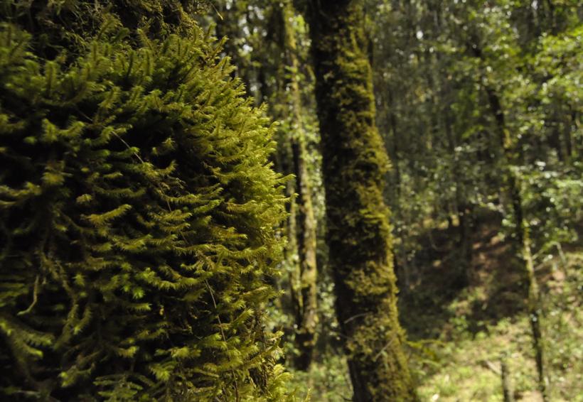 Oaxaca obtienen mejores resultados  en acciones de reforestación