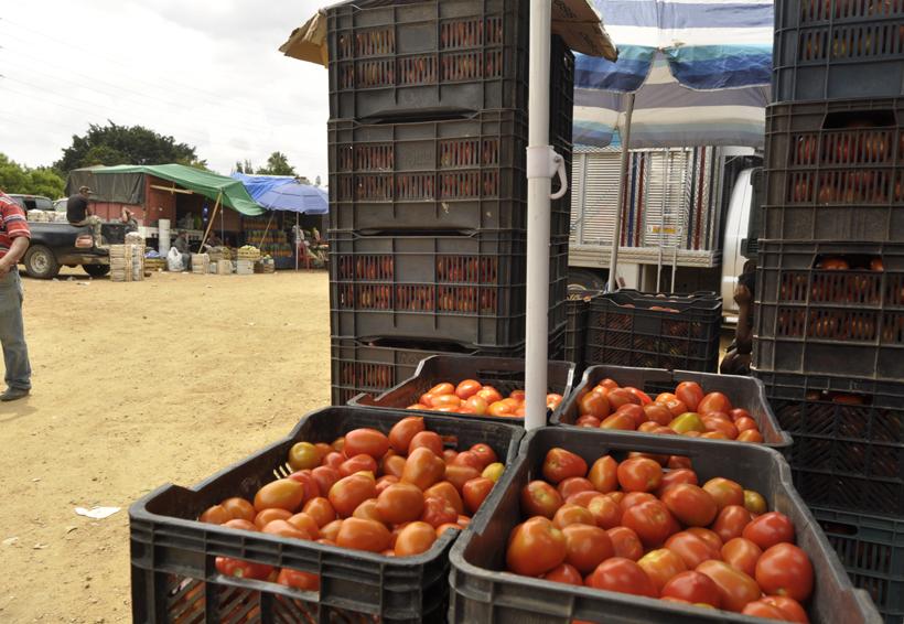 Precio del tomate sigue aumentando en Oaxaca | El Imparcial de Oaxaca