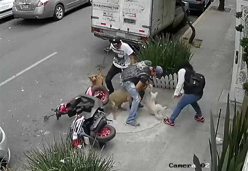 Pitbull ataca a otro perro ya su dueño