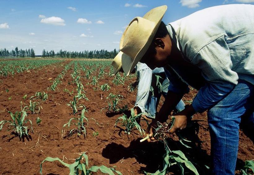 Renegociación del TLCAN debe sacar de la devastación al campo mexicano: UNAM | El Imparcial de Oaxaca