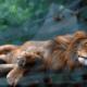 Roban animales de zoológicos para comérselos