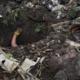 Alerta CNDH aparición de más fosas clandestinas en México