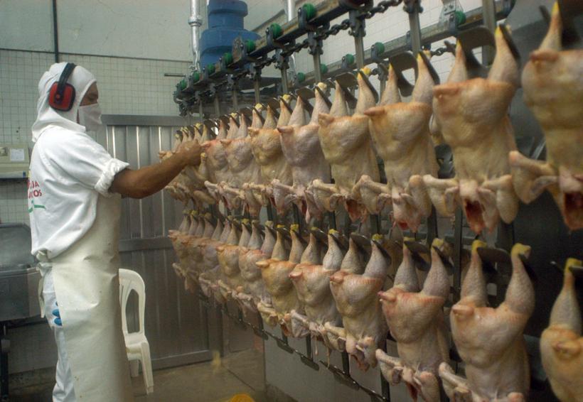 Profeco y avicultores realizarán monitoreo para detectar alzas injustificadas en pollo y huevo | El Imparcial de Oaxaca
