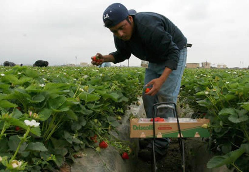 Aumenta la demanda de trabajadores mexicanos temporales en EU | El Imparcial de Oaxaca