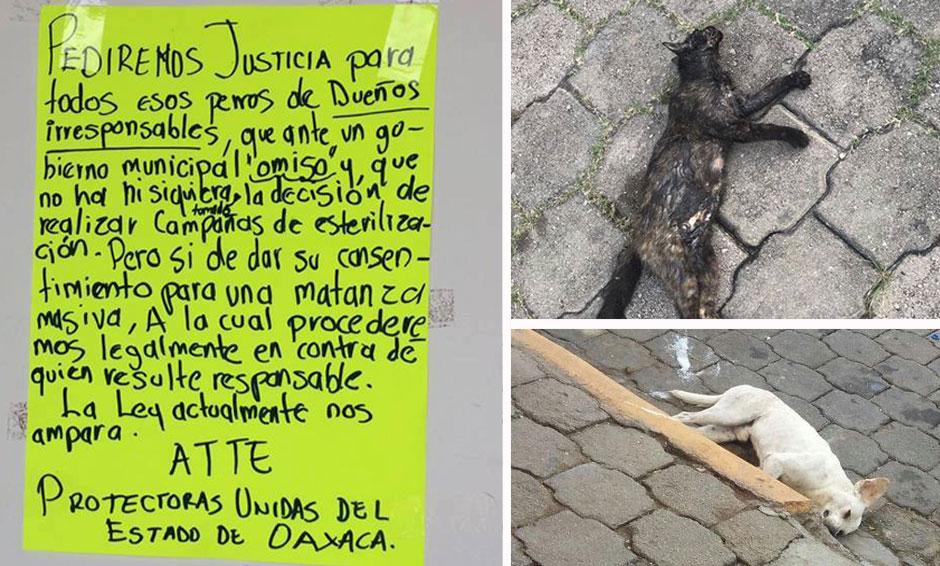 Denuncian envenenamiento masivo de mascotas en Etla, Oaxaca | El Imparcial de Oaxaca