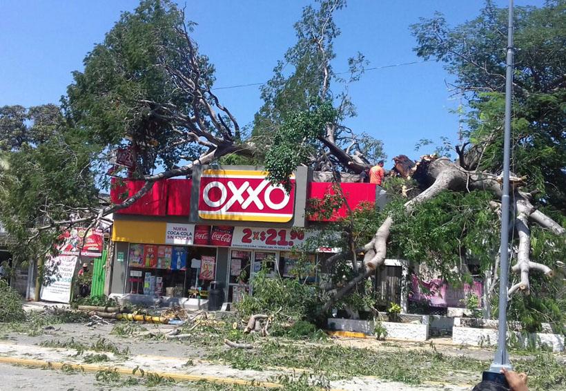 Se desploma árbol y causa daños a negocio y autos en el Istmo | El Imparcial de Oaxaca