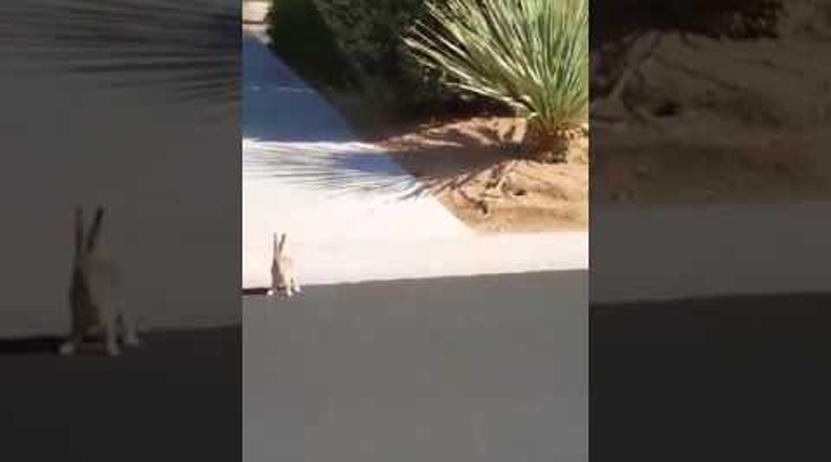 Un conejo blanco y una serpiente protagonizan un feroz enfrentamiento | El Imparcial de Oaxaca