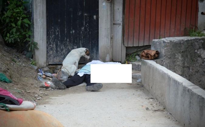 Perro sufre al ver morir baleado a su amo