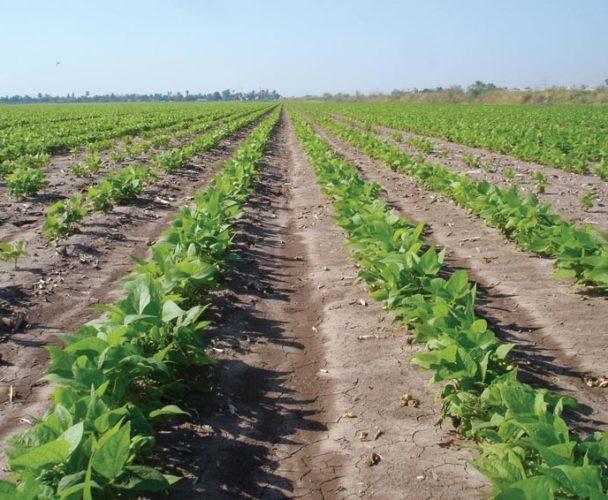 Faltan por concretar proyectos rurales en la Cuenca