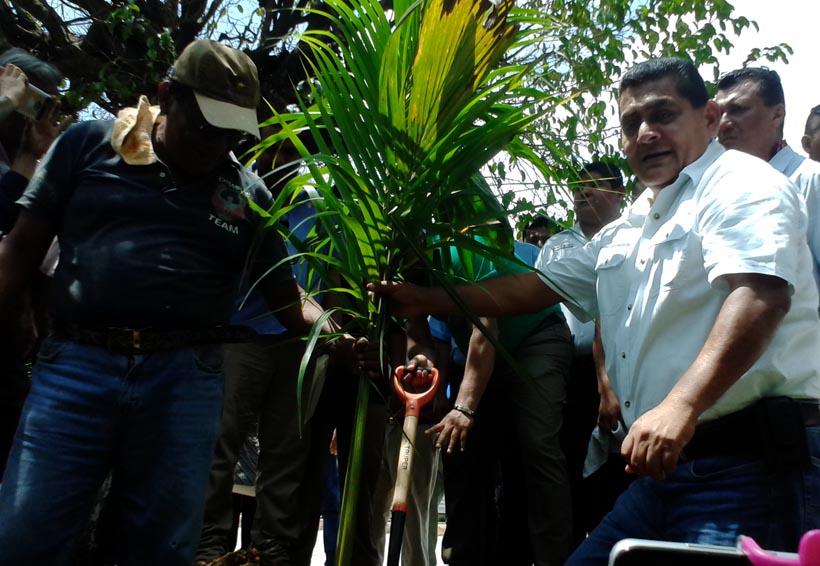 Inician en Tuxtepec, Oaxaca primera etapa de  reforestación del Muro Boulevard Francisco Fernández