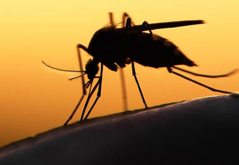 ¿El virus del zika podría ayudar contra el cáncer cerebral? | El Imparcial de Oaxaca