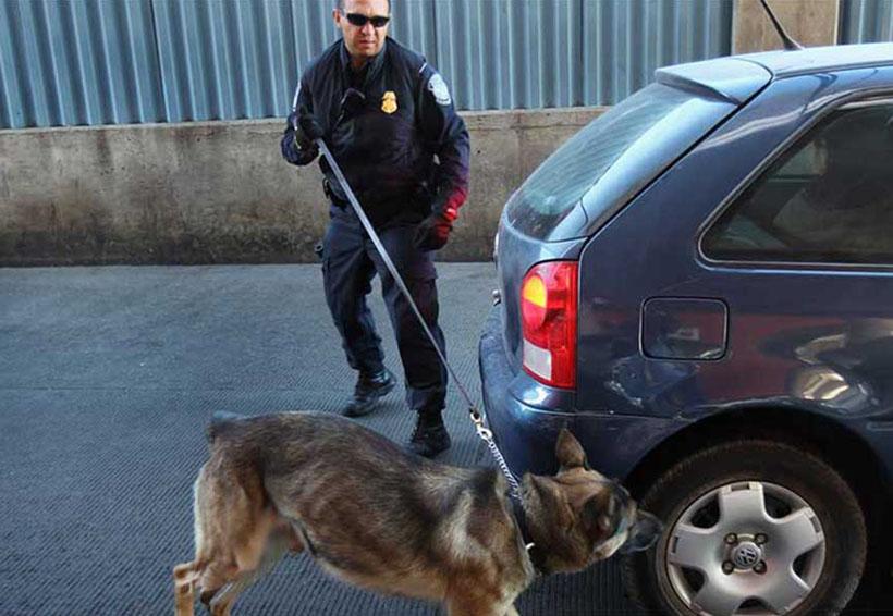 EU regala a México 25 perros para detectar droga | El Imparcial de Oaxaca