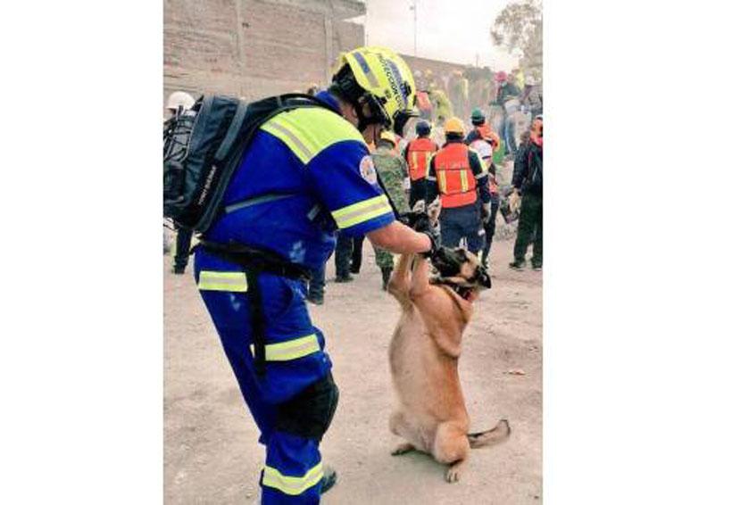 Roban a perrita que participó en las labores de búsqueda tras el sismo del 19 de septiembre | El Imparcial de Oaxaca