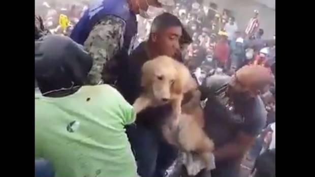 Rescatan a perro de edificio colapsado en la colonia Roma de la CDMX | El Imparcial de Oaxaca