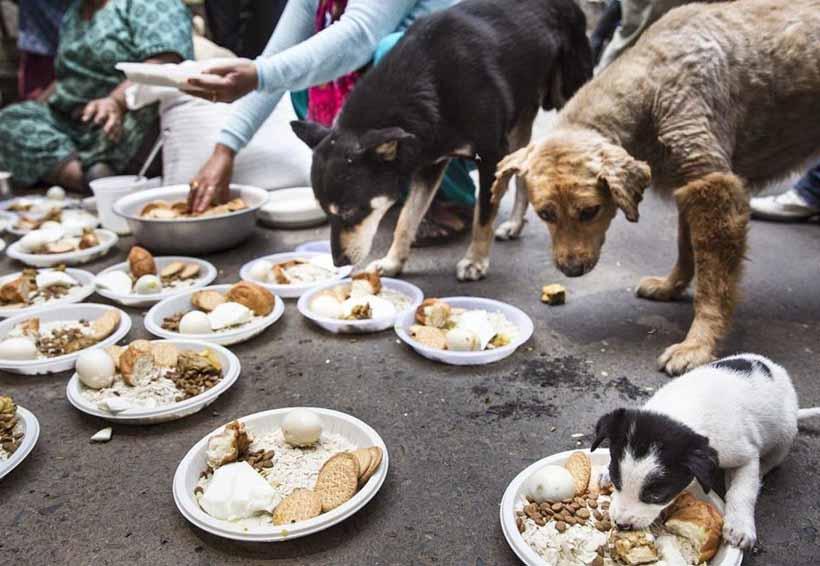 Veterinarios de la UNAM atienden a más de 100 perros afectados por el sismo | El Imparcial de Oaxaca