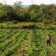 En Oaxaca aplicarán seguros ante pérdidas en el campo