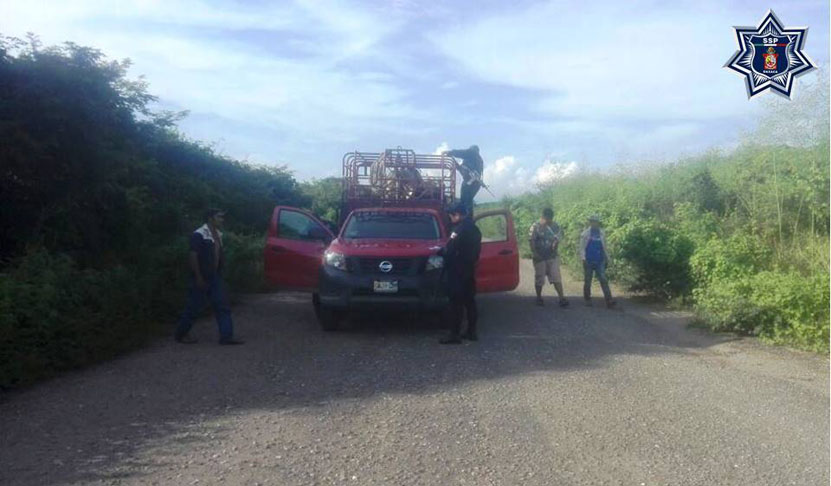 Trasladaban ganado de  dudosa procedencia | El Imparcial de Oaxaca