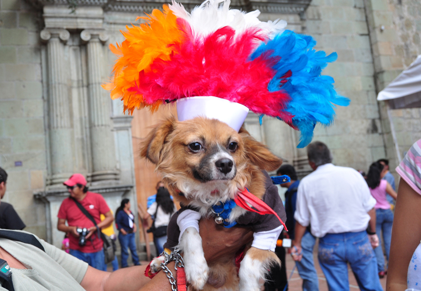 En Oaxaca, cientos de católicos llevan a bendecir a sus mascotas | El Imparcial de Oaxaca